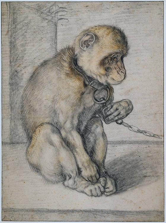 """Hendrick Goltzius, """"Mono encadenado"""", 1592-1602."""