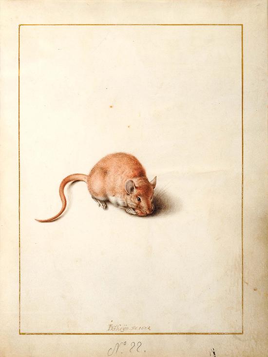 """Jack de Gheyn II, """"Ratón de campo"""", 1604."""